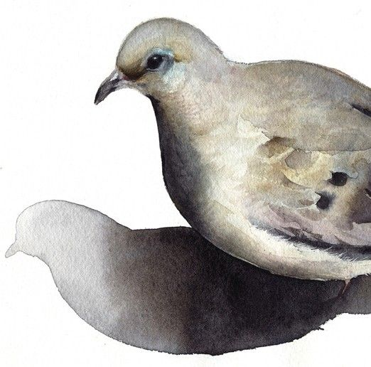Mourning Dove- bird watercolor-Archival print -watercolor painting print via Etsy