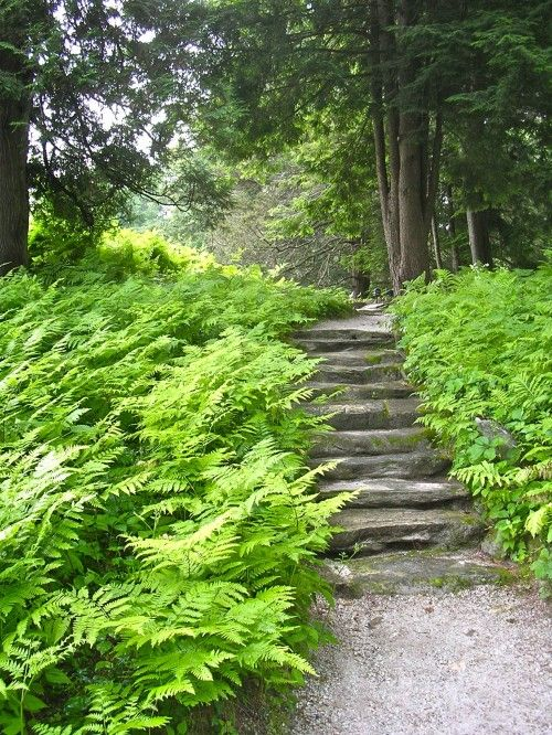 steps and fernsStones Step, Stone Steps, Secret Gardens, Traditional Landscapes, Woodland Gardens, Stones Walkways, Landscapes Design, Edith Wharton, Weights Loss