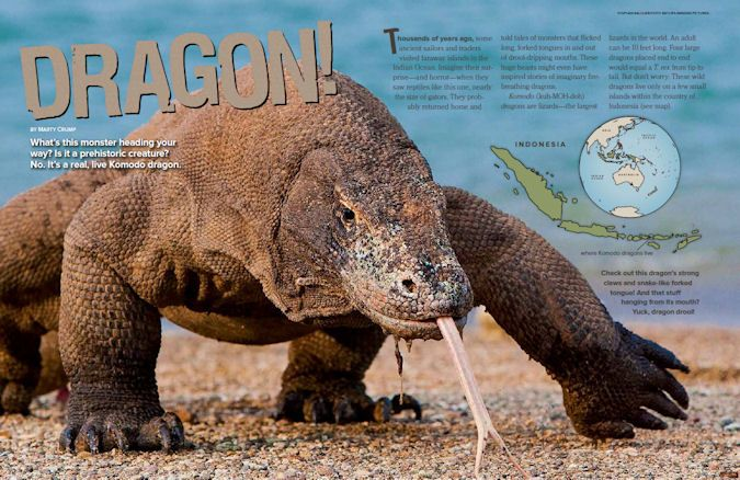Learn all about komodo dragons, the largest lizards in the world, from Ranger Rick Magazine.