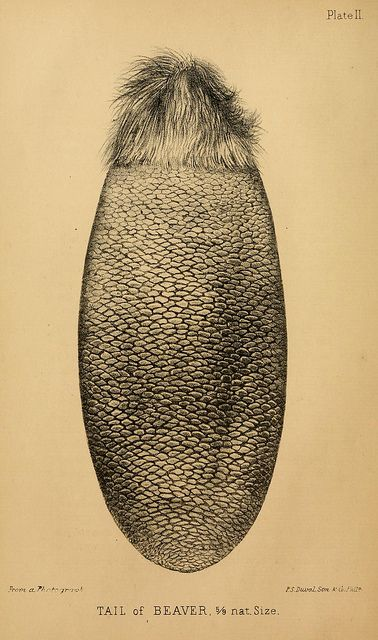 n35_w1150 by BioDivLibrary, via Flickr
