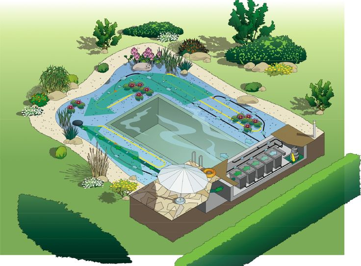 Concept drawing for natural swim pond