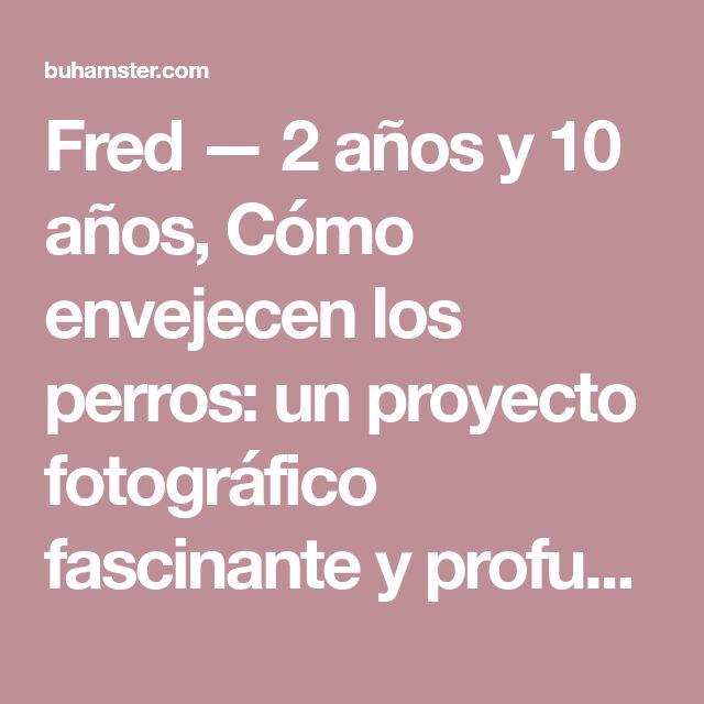 Fred — 2 años y 10 años, Cómo envejecen los perros: un proyecto fotográfico fascinante y profundamente conmovedor - (Page 2)
