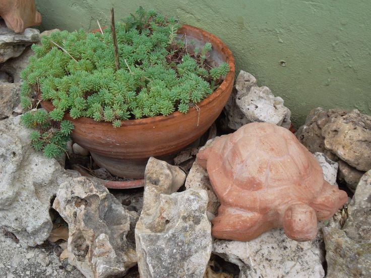 .my wonderful garden <3