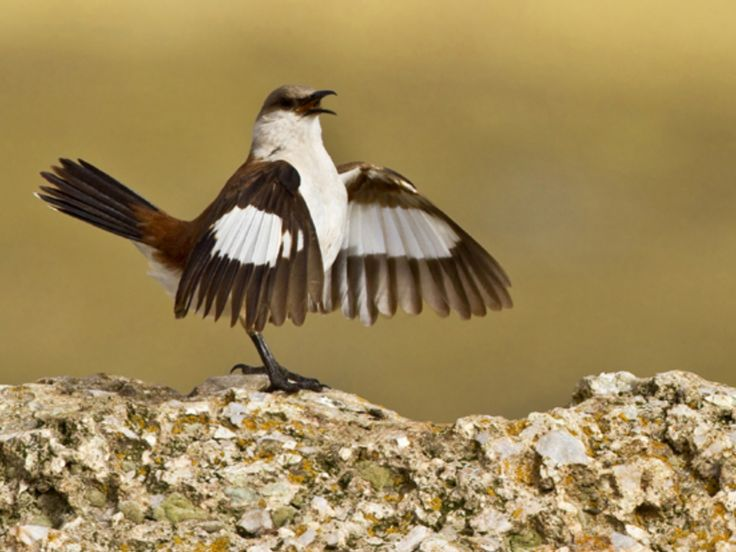 20 best BIRDS and FLOWERS av JOHN SLOAN images on Pinterest | Bird ...