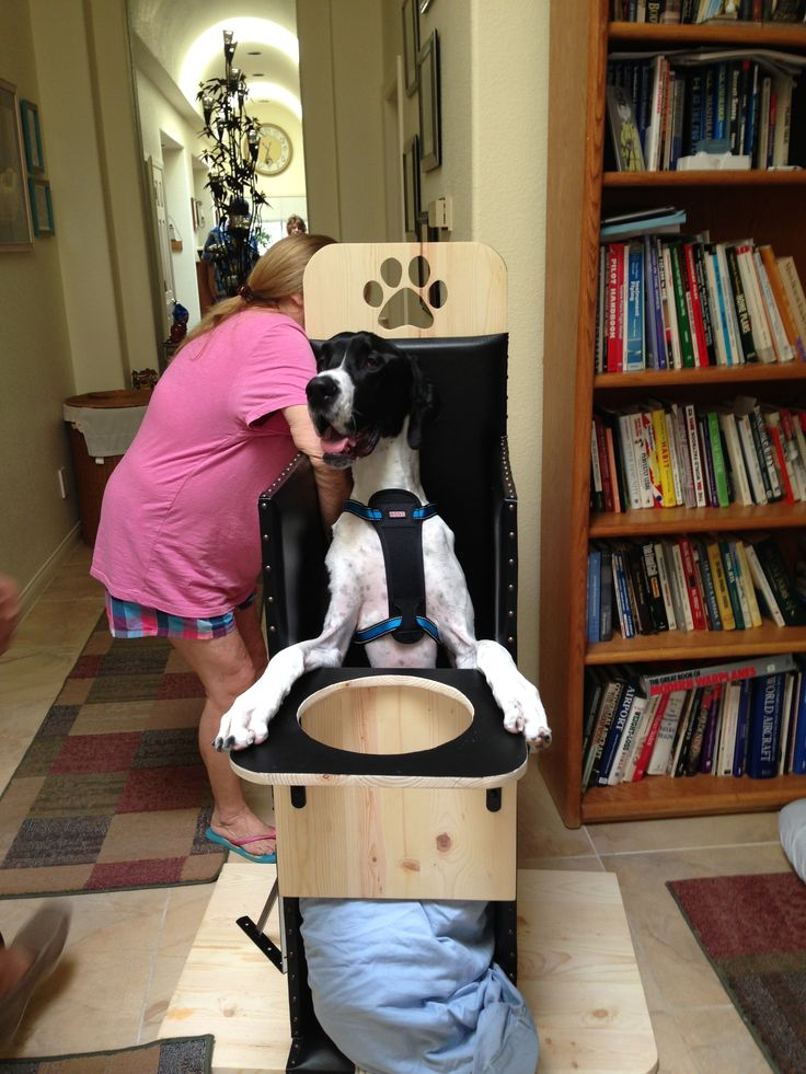 Great Dane in a bailey chair | I LOVE My Dog | Pinterest ...