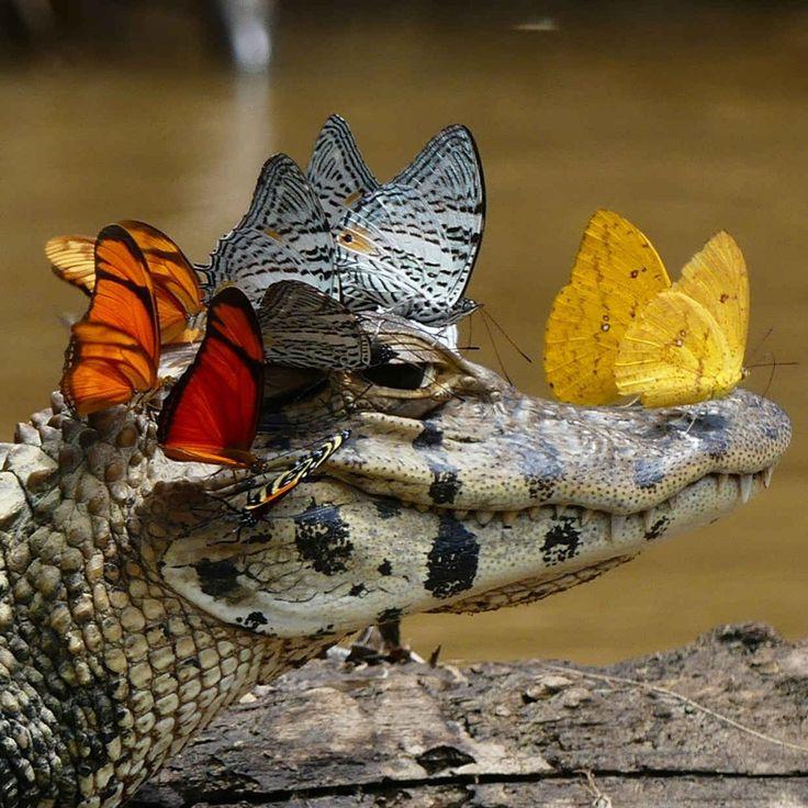 Открытка, смешная картинка с крокодилом
