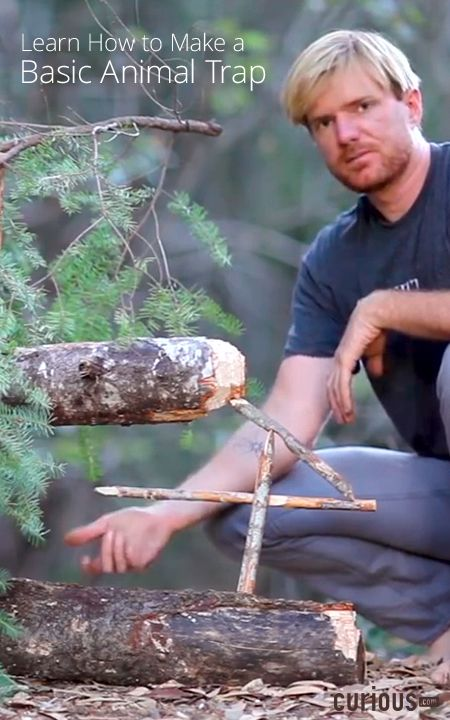 In this lesson with survivalist Tom McElroy, learn how to make a figure four deadfall animal trap that works in just about any survival situation.
