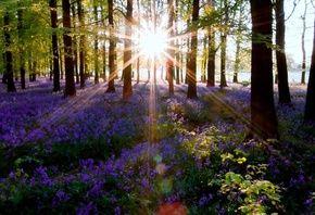 деревья, цветы, лучи солнца