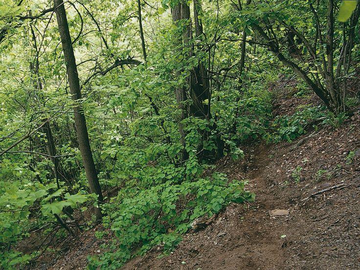Rik edellauvskog med alm og lind (Hovedtekstbilde)