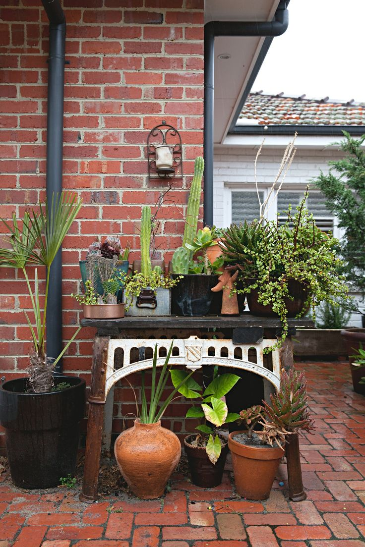 This Weekend: Do The Proper Prep Avoid a Shock To House Plants