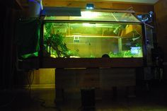 Website to build hermit crab tank. I want my crabs to live there.