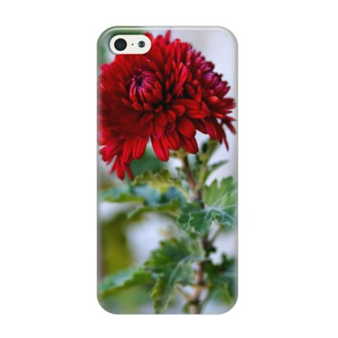 Чехол для iPhone 5/5s Красный цветок (от 1300 рублей). Хризантема, цветы, весна. Крым, Феодосия, Коктебель. Доставка чехлов по России и всему миру
