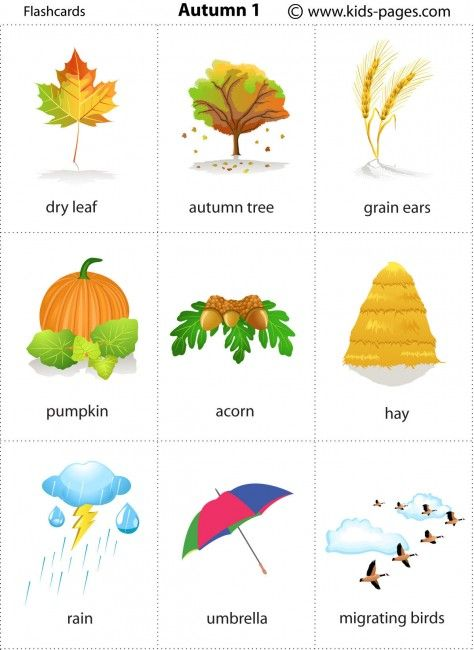 Free printable autumn flashcards