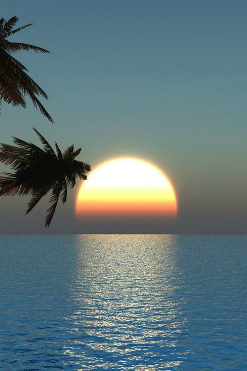 Serene Ocean with Peeking Palms to add Flare to the Sunset!