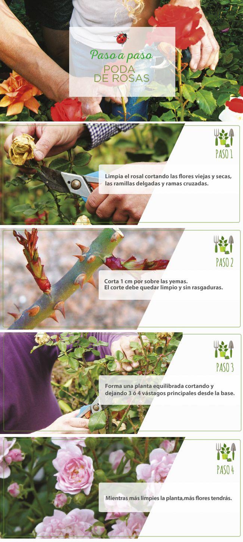 #Poda #Rosas  #PasoApaso #Jardinería #Easy