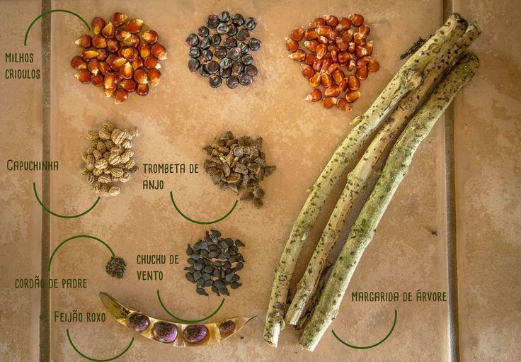 """3.5K Flares Facebook 3.5K Twitter 0 Google+ 0 Email -- LinkedIn 0 3.5K Flares × As sementes crioulas são otesourocultivado peloscamponeses ancestrais. Elas são nossa herança genética, nossa evolução, nossa história.Hoje simplificamos as lavouras em monoculturas, reduzimos a diversidade de alimentos aos produtos """"convencionais"""". É só observar uma feira e perceber que são sempre os mesmos legumes e verduras. Alface, rúcula, beterraba, batata, tomate e... Read More"""