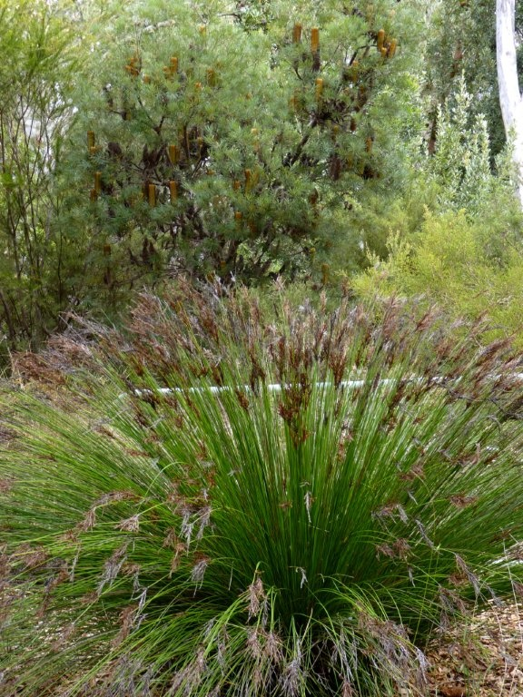 An Australian Native Grass On Display At The National