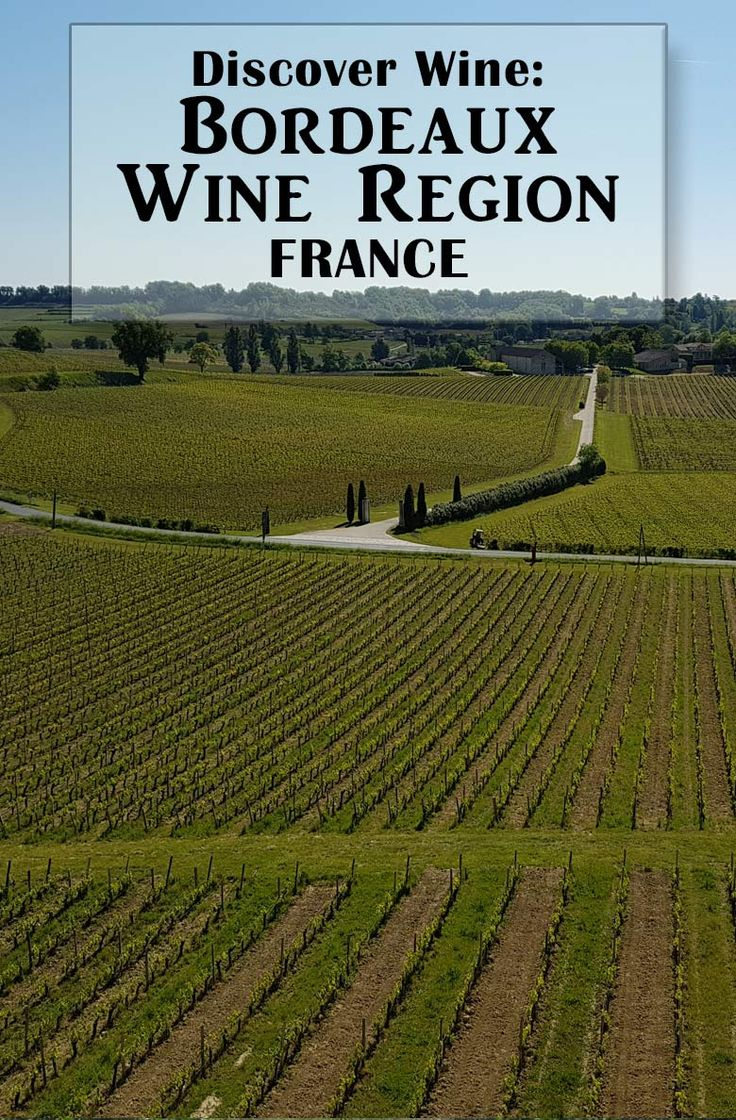 bordeaux wine region essay Bordeaux is arguably the world's most famous wine region, and is certainly among the most prolific its 10,000+ producers make a vast quantity of wine each year, from generic, everyday aoc.