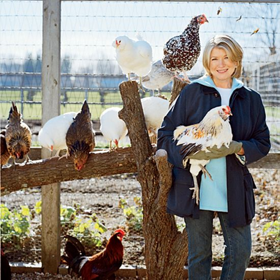 F's September issue: all about chicken