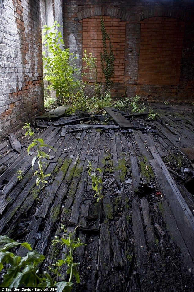 An inside view of Cleveland Co-Operative Stove Company in Cleveland, Ohio shows regrowth coming up through the decayed floor