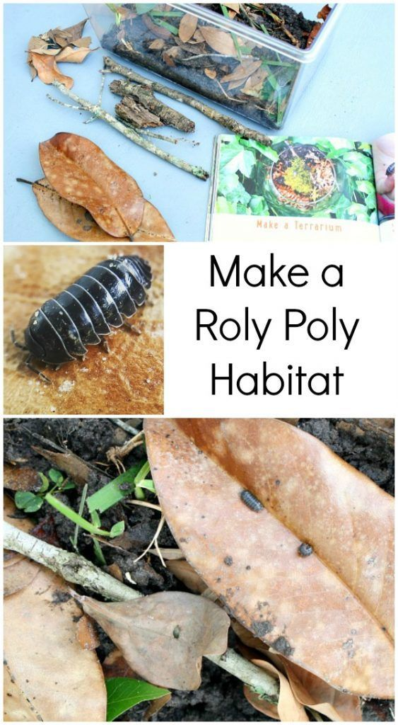 How to Make a Roly Poly Habitat with Kids-Includes free printable planning and…