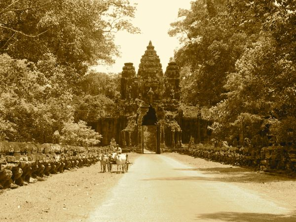 A snapshot in time: Buffalo cart near Angkor Wat, World Heritage-listed temple complex on the outskirts of Siem Reap. www.foodwinetravel.com.au