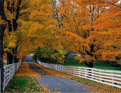 Image Result For Free Thanksgiving Computer Wallpaper Backgrounds Hd Wallpaper
