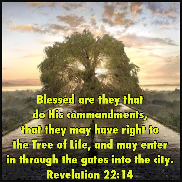 Even In The Garden Of Gethsemane Jesus Prayed Not My Will But Thine Be Done Luke 22 42