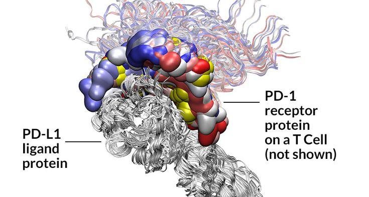 Immune Checkpoint blockade therapies