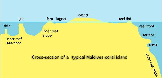 Graphic of the reef structure of most Maldive islands, Indian Ocean.