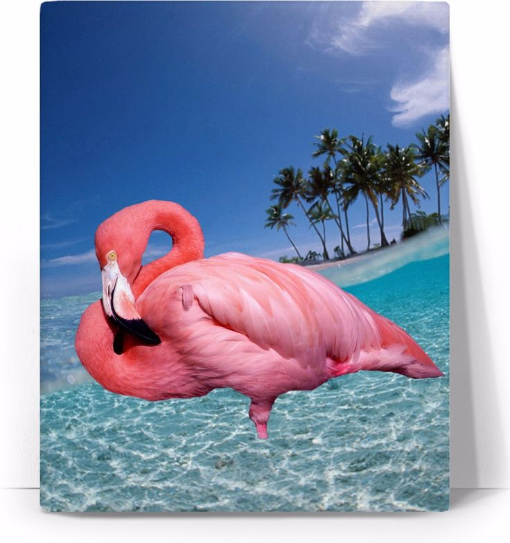 Check out my new product https://www.rageon.com/products/flamingo-and-palms-art-canvas-print?aff=BWeX on RageOn!