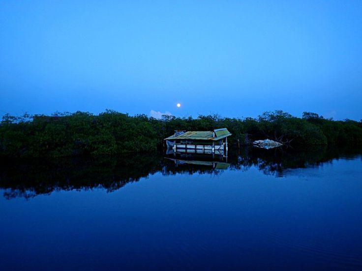 Los manglares, Utila.