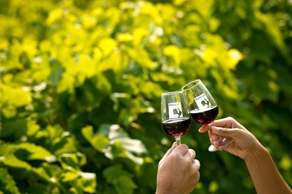 Tchin tchin! avec un vin de la Montérégie