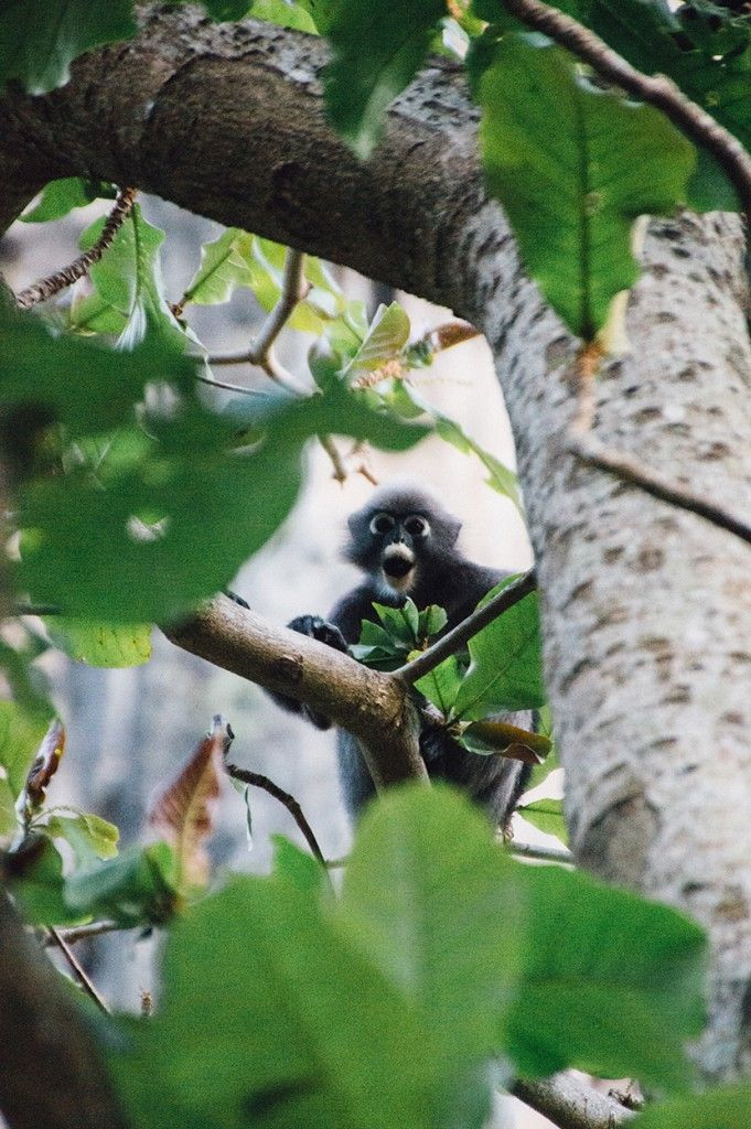 A monkey in Tonsai Beach, Ao Nang Bay, Krabi #Thailand by The Frenchie Abroad www.thefrenchieabroad.com