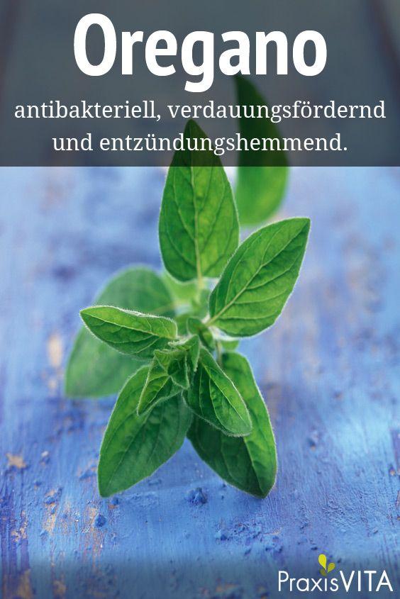 Oregano wird in der Volksmedizin bei Verdauungsstörungen, aber auch bei Erkältungen eingesetzt.
