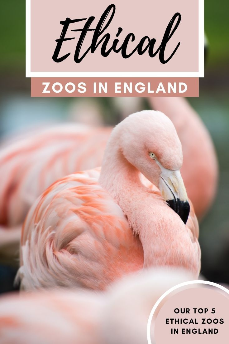 5 Ethical Zoos In England That You Should Visit Soon England Zoo Monkey World