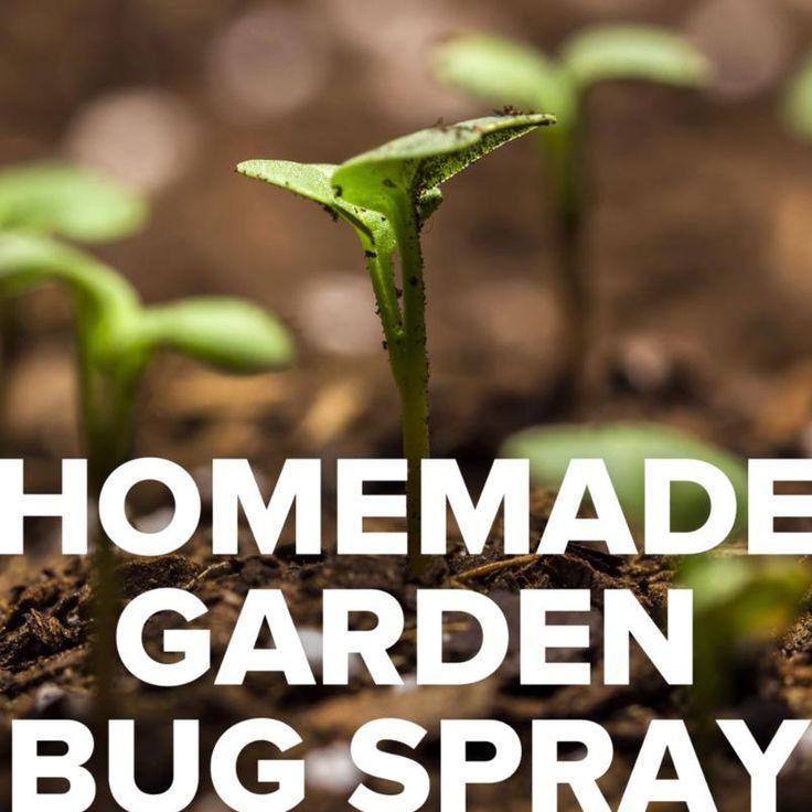 Diy garden bug spray gardening bugs plants spray