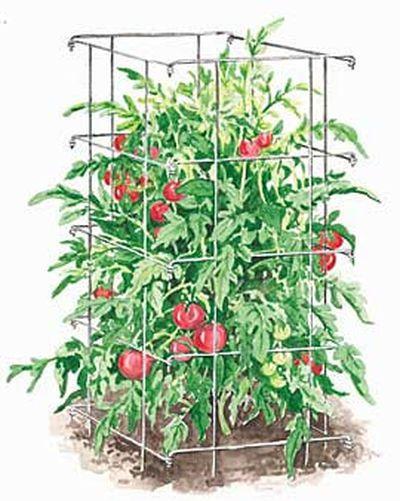 Tomato Support Techniques
