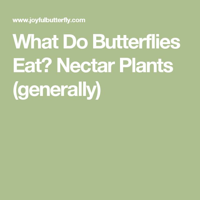 What Do Butterflies Eat? Nectar Plants (generally)