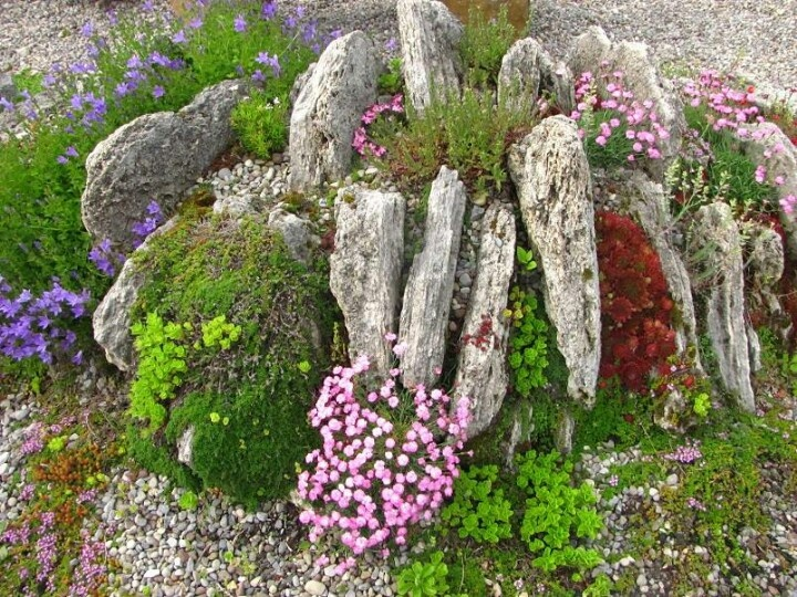 Alpine setting for rockery plants.
