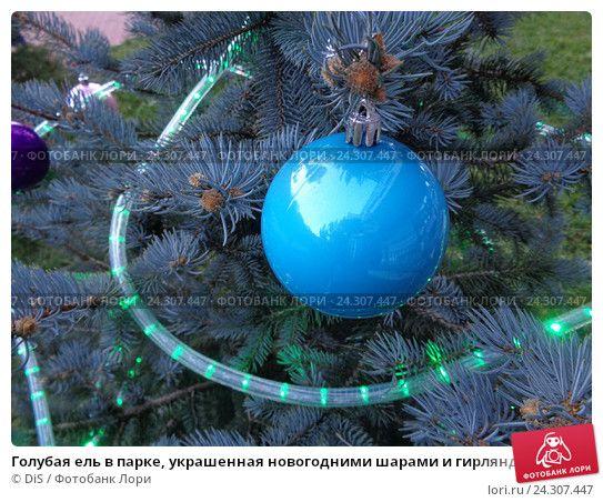 Голубая ель в парке, украшенная новогодними шарами и гирляндой © DiS / Фотобанк Лори