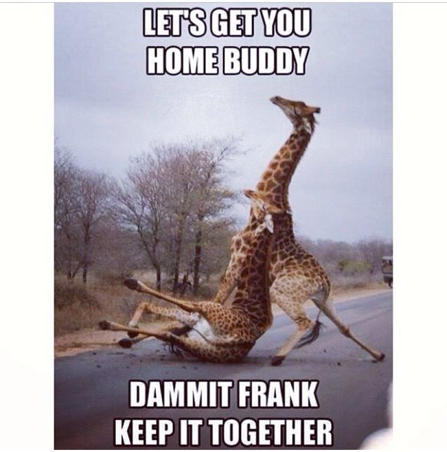 Giraffe Quotes Funny: Funny, Funny Pictures, Funny