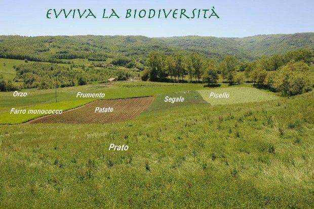Biodiversità Biologico La Corte di Boceto Carpaneto di Tizzano Val Parma