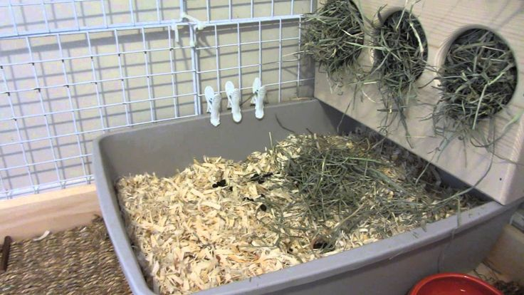 Litter box training a rabbit should be fairly easy if you