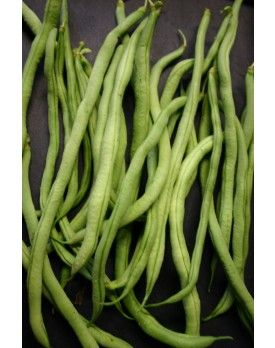 Fortex Pole Bean//Pinetree Seeds