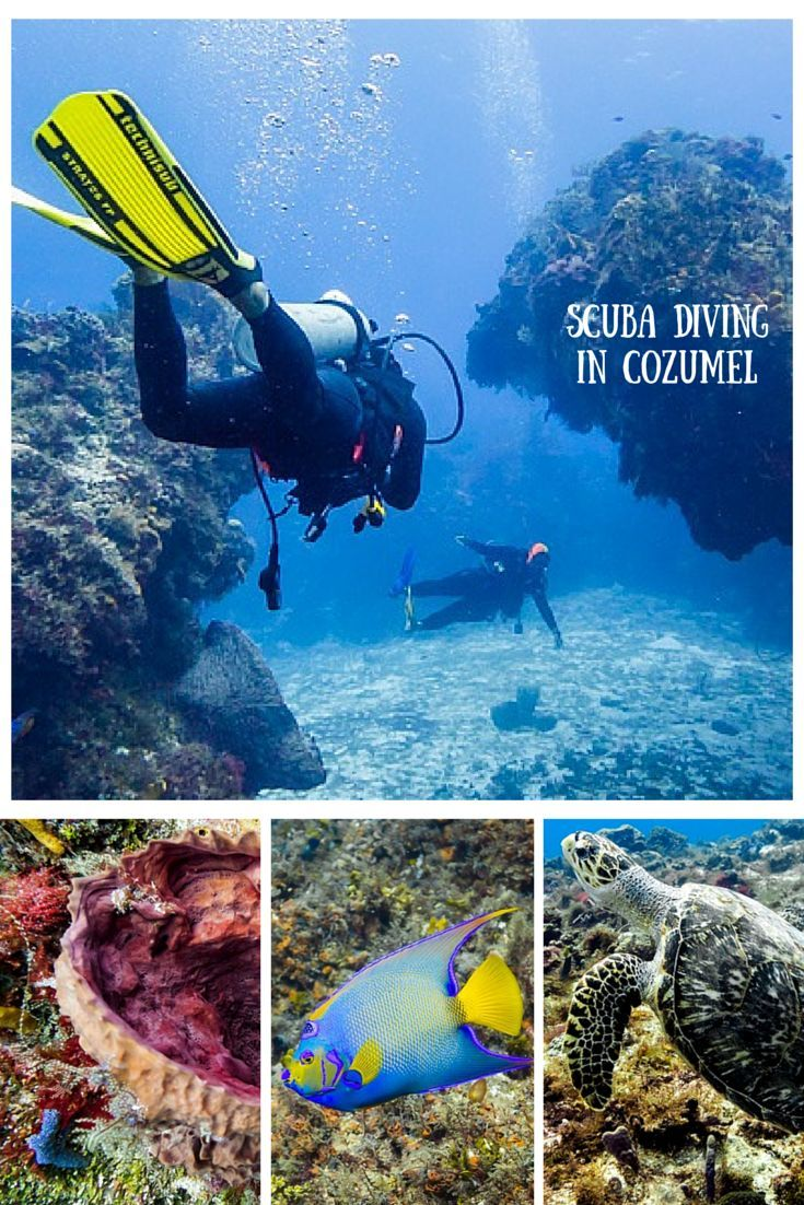 440 best scuba images on pinterest blue draw and for her diving in cozumel another dream come true xflitez Images