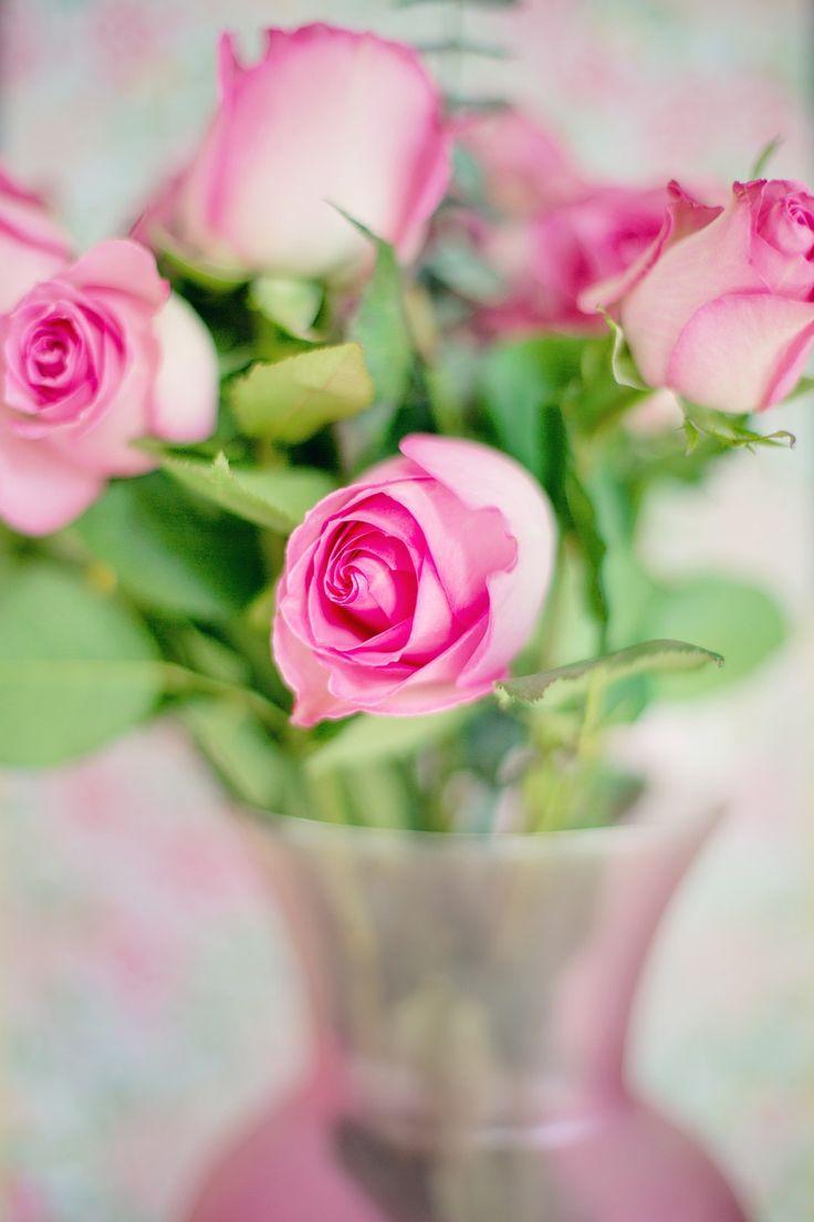 Ροζ Τριαντάφυλλα, Τριαντάφυλλα, Λουλούδια, Ειδύλλιο
