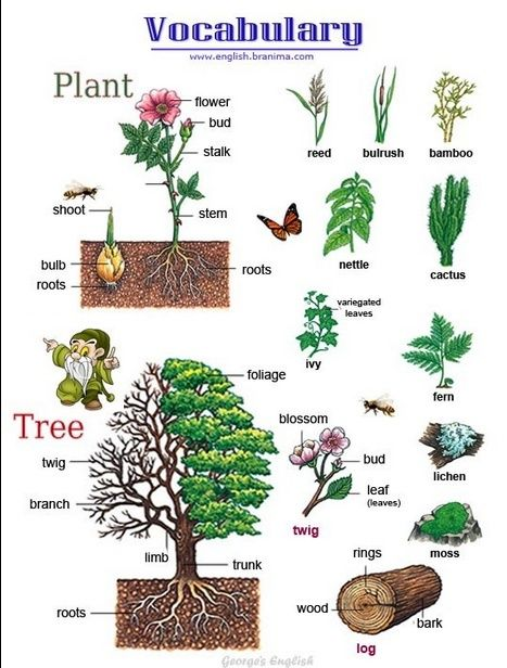 Vocabulary: Parts of a flower and a tree