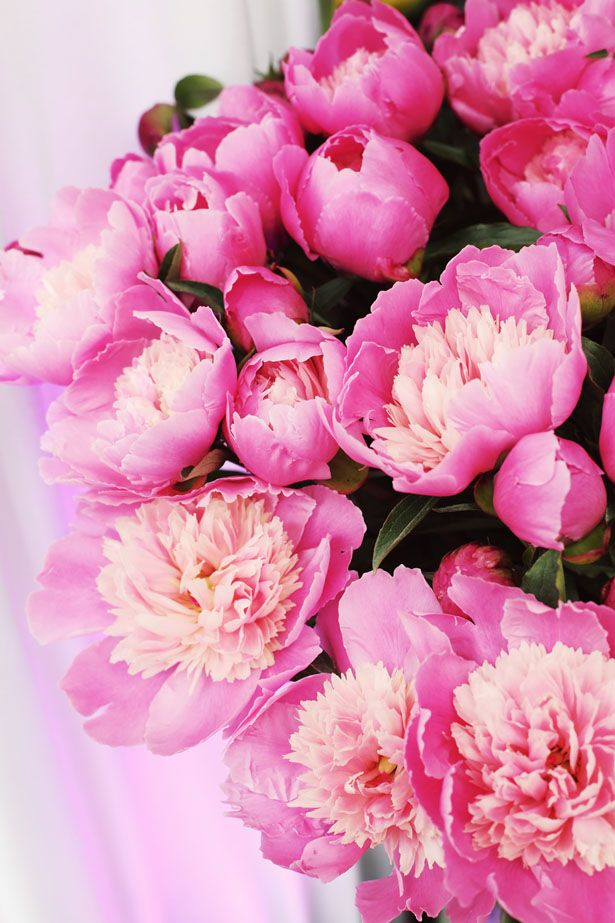 Punchy peonies.