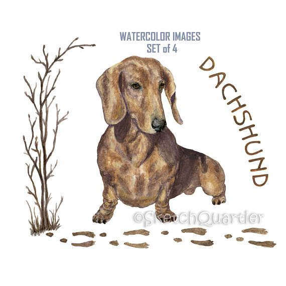 Watercolour Dachshund Set of 4 image on transparent